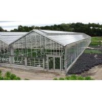 Quality UP Ventilation Muti Span Sunshade PC Sheet Greenhouse for sale
