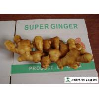Quality 150 - 300 G / Per Fresh Yellow Ginger Sell To Supermarket And Wholesaler for sale