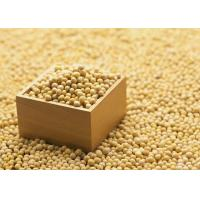 Quality Organic Soybean Extract Powder 40% Isoflavones to improve brain function and dementia for sale