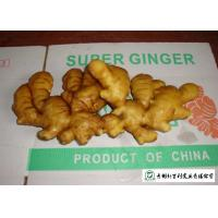 Quality Medicinal Value Organic Fresh Ginger , Chinese Fresh Young Ginger For Swelling for sale
