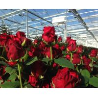 High Output PC Sheet Greenhouse Nine Systems Combined For Flower Growing for sale