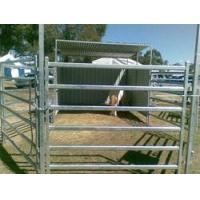 Quality 6 Bar Heavy Cattle Panel for sale