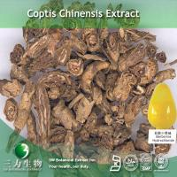 Quality Coptis Chinensis Extract for sale