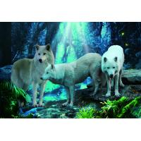 Quality Pet / Pvc / PP Wolf Animal Photos Lenticular 3d Posters For Store Eco - Friendly for sale