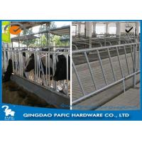 Quality Individually Feeding Dairy Cow Headlock Stockade Plate Length 8 Meter for sale