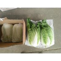 Quality No Yellow Flower Flat Head Cabbage Grows In Village Without Pollution for sale
