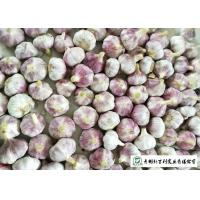 Quality Healthy Fresh Organic Garlic , Natural Garlic Liliaceous Vegetable Type for sale