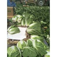 Quality Agricultural Clean Fresh Chinese Cabbage Very Low In Calories 1kg / Per for sale
