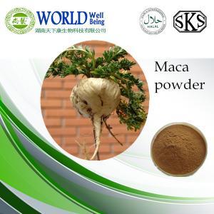 China GMP maca extract powder/herbal medicine for sex improvement maca extract powder/ hot sell 4:1 maca extract powder bulk on sale