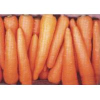 Buy cheap Fresh Carrot from wholesalers