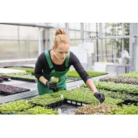 China Venlo Type PC Sheet Greenhouse Cover Thickness 4 / 8 / 10mm Simply Constructed And Installed for sale