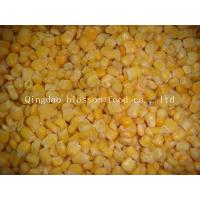 Buy cheap IQF Frozen Sweet Corn from wholesalers