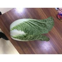 Buy cheap Light Sweet Fresh Chinese Cabbage No Irregular Shape No Mouldy from wholesalers