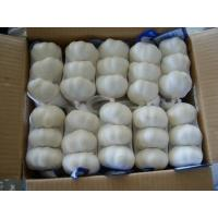 Quality fresh garlic white/normal white garlic 4.5-6.0cm from Shandong for sale