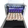 Digital Egg Marking Equipment / Egg Date Stamp MachineFor Duck or Pineal Eggs for sale