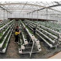 Wind Load 120KM/H PC Sheet Greenhouse With A Type Strawberry Hydroponic Rack for sale