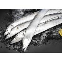 Quality Belt Hairtail Fish Natural Seafood Iso Brc Trichiurus Lepturus for sale