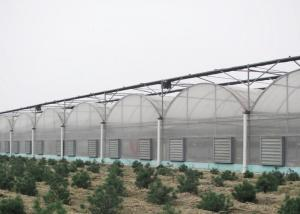 Quality Anti Wind Climate Control Lettuces Multi Tunnel Greenhouse for sale