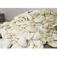Quality frozen equator Squid 1000g 2000g Size for sale