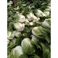 Quality Lower Blood Pressure Green Flat Head Cabbage Low In Calories Rich Vitamin C for sale