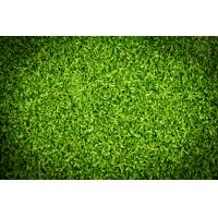Buy cheap Putting green artificial turf from wholesalers