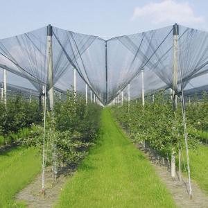 Quality Anti-Hail Net for Trees,Garden,Vegetables and Fruit,3.6-5.0cm oepning,white,green,black for sale