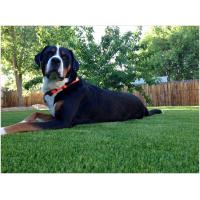 Quality Water Permeable Artificial Grass For Dogs Synthetic Sand / Rubber Infill Multicolor for sale