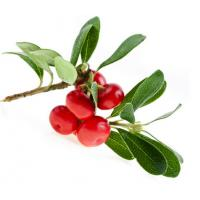 China Bearberry Extract Alpha-Arbutin 98% powder on sale