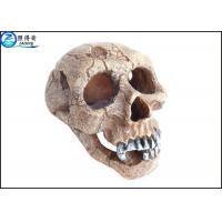 Quality Skull wreckage Polyresin Aquarium Decorations , Glass Aquarium Decoration for sale