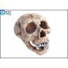 Buy cheap Skull wreckage Polyresin Aquarium Decorations , Glass Aquarium Decoration from wholesalers