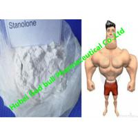 Quality Stanozolol Winstrol Bulking Cycle Steroids , GMP white crystalline powder for sale
