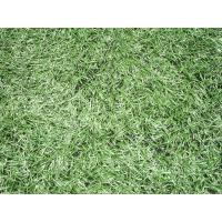 Quality Monofilament Synthetic Soccer Grass /   indoor turf carpet , eco friendly for sale