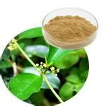 China Gymnema Extract Gymnemic acids 25%,Weight loss, reduce blood glucose and blood sugar on sale