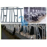 Quality Metal Locking Feed Barriers Livestock Headgate / Headlocks For Beef Cattle for sale