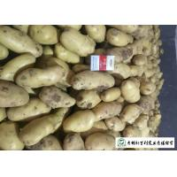 Quality Nutritious Fresh Potato Stored In A Dry And Cool Place Prevent Germination for sale