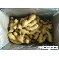 Quality Fleshy Organic Fresh Ginger , Juicy Old Ginger Common Cultivation Type for sale