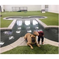 Quality 20mm Non Toxic Pet Artificial Turf Green With Good Drainage For Pets And Dogs for sale
