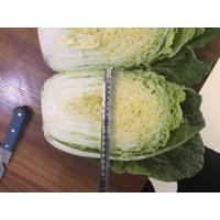 Quality Natural Hue Fresh Chinese Cabbage No Pesticide Residue Fiber Shin for sale