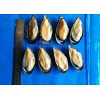 Quality Iso Frozen Cooked Mussel Half Shell Mytilus Edulis Chemical Off for sale