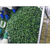 China Natural IQF Frozen Vegetables / Spinach Various Shapes / Sizes Optional on sale