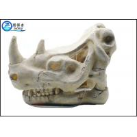 Quality Solid Fish Tank Decorations , Exotic Environments T-Rex Skull Aquarium Ornament for sale