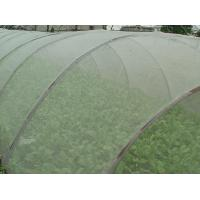 Quality Green House Using Anti-insect screen 40x25 mesh,PE Plant Anti Insect Net,Mosqutio Screen for sale