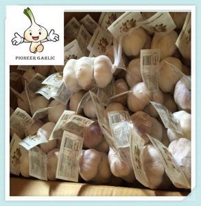 Quality Normal White Garlic Fresh Garlic Purple Garlic/Red Garlic/Alho for sale