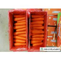 Quality Own Plantation Fresh Chinese Carrot No Stain For Frozen Vegetable Factory for sale