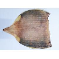 Quality Raw Material  Whole Dried Squid Body  For Fresh Roasted Squid No Starch for sale