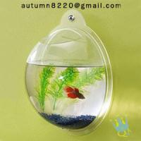 Quality acrylic wall mount fish bowl for sale