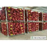 Quality Round Shape Sweet Yellow Onion No Pesticide Residues Without Pollution for sale
