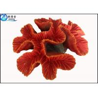 Quality Fake Coral Natural Aquarium Decorations Fish Tank Background with Silicone and Polyresin for sale