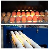 Electric Egg Stamping Machine600 DPI High Resolution With 1 - 4 Printing Lines for sale
