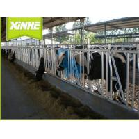 Quality Galvanized Surface Cattle Headlock Feeder , 5 Head Opening Cattle Crush Head Lock for sale